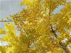 冬季叶子黄了