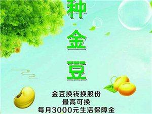 北京全球村村通公司重金推广赚钱活动
