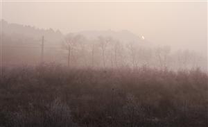 雾凇(今天早上雾凇)