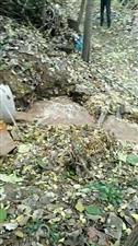 大量洗姜的污水被排在了居民区内,导致地下水严重污染