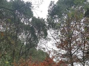 不想说再见那条秋色小路,邂逅多少幸福与离愁。苍茫的思恋,一眼望不见尽头。狭路相逢