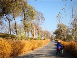 宝坻至香河潮白河两岸柏油路已畅通