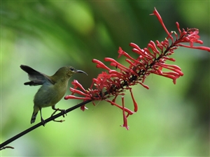 珠海,哪有比较好的小鸟摄影目的地,这里…