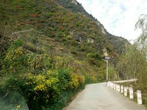 山阳路边的秋