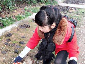 【爱心公益】大天恒彩票注册公益11月长台长安红枫林