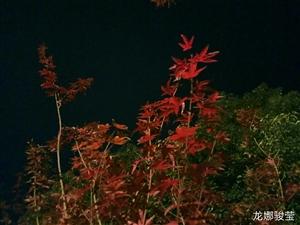 秋之夜韵!