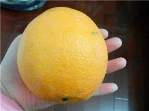 果园直发正宗赣南脐橙,现摘现发