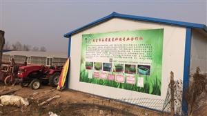 南宫市永前黄韭盆景盆栽黄韭阳台蔬菜培育基地
