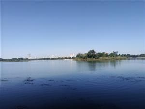 滨州蒲园越来越美了