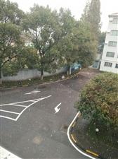 下雪天跟绿叶更配。。。