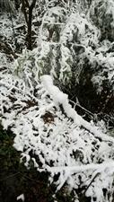 2018兴文的第一场雪,特意跑三十多公里来仙锋。