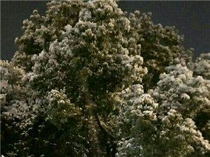 杭州第一场雪