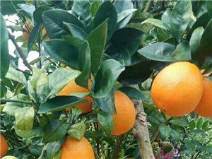 �M南�橙――只�樵谧钐鹈鄣�r候遇�你