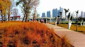 温暖的阳光(手机摄于天汉湿地公园)