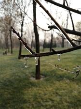 滴水成冰的美丽