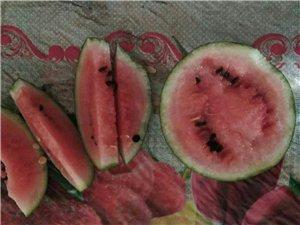 冬天的西瓜熟了