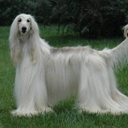 世界上最聪明狗狗排行榜