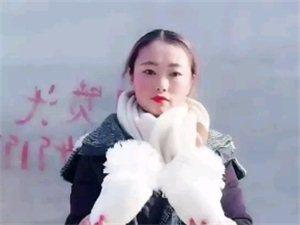 白色毛领鸽