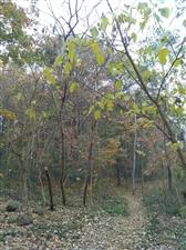 记得深秋的时候在大蜀山