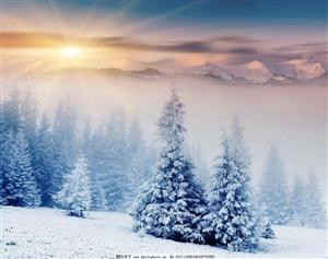 小诗一首:松之雪-伊春市,大草原