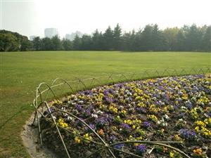 冬日暖阳世纪公园,有点绿博园的味道。。。