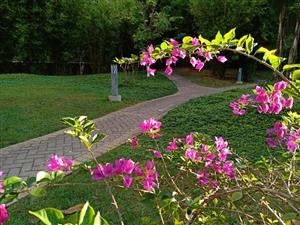 心中有春天,处处是繁花;事事认真学,行行出状元