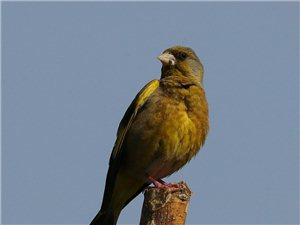 过去不曾在甘肃省区域范围内活动的鸟儿,在嘉峪关驻足停留下来了。
