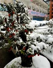 昨夜雪染凤城