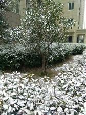 下雪的2018年年底