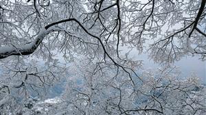 雪后武当,变成一座仙山。