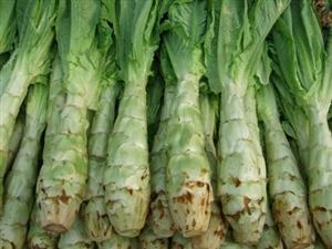 系列养生食补一蔬菜篇(莴苣)