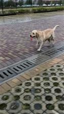 谁家狗狗走丢了,上高清图,地点:人民医院