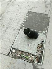 为什么我总是看到流浪狗,一个月以前才捡到一只土狗。