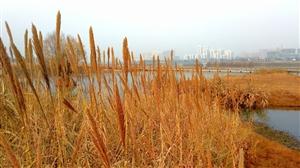 汉江河畔冬日暖色(上)