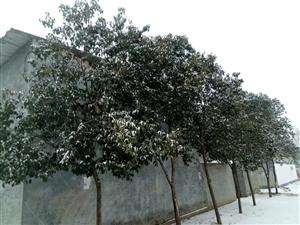 2019年的第一场雪