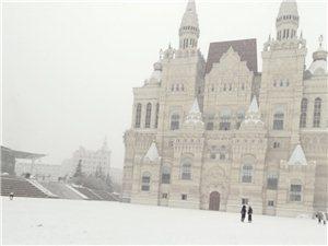 雪中的西��斯
