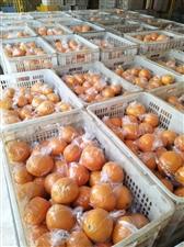 电商园有大量储藏果,冬至前摘的,吉谭圳下的果、甜度好,果面干净