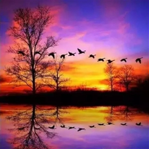 小诗一首:醉夕阳-伊春市,伊春区大草原,于喜波