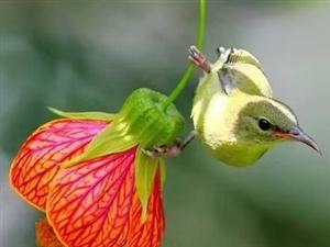 你�F,有人跟著你,�@就是幸福;你病,有人照�你,�@就是幸福;你冷,有人抱著你,�@就是幸福;