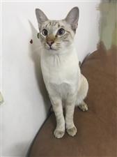 帮忙找找猫,谢谢!留意一下你们的小角落,楼道里有没有白色猫。