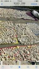 合作社28亩地的红薯粉条10元一斤、粉面7元一斤、需要的联系、小区32栋102、庙湾高杨店交界三所楼