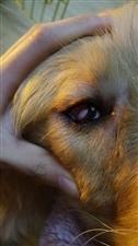 狗狗寄养在宠物店后受伤该怎么办