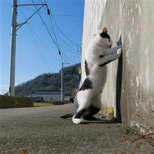 猫的地盘猫做主