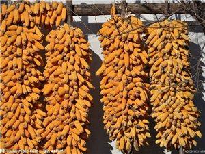 系列养生食补一五谷篇(玉米)