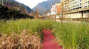 镇巴生态湿地