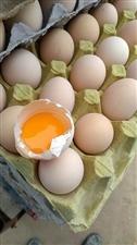家养土鸡蛋