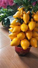 这是什么水果?