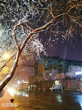 《一夜桃花雪》