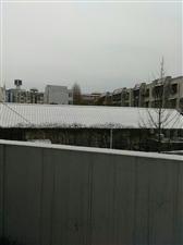 正月初四的小雪花