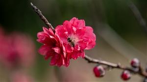 李花白,桃花红